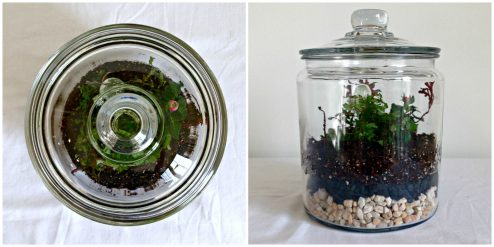 DIY: Coffee Jar Terrarium