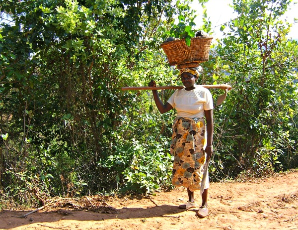 Women in Coffee: Malawian Coffee Farmers